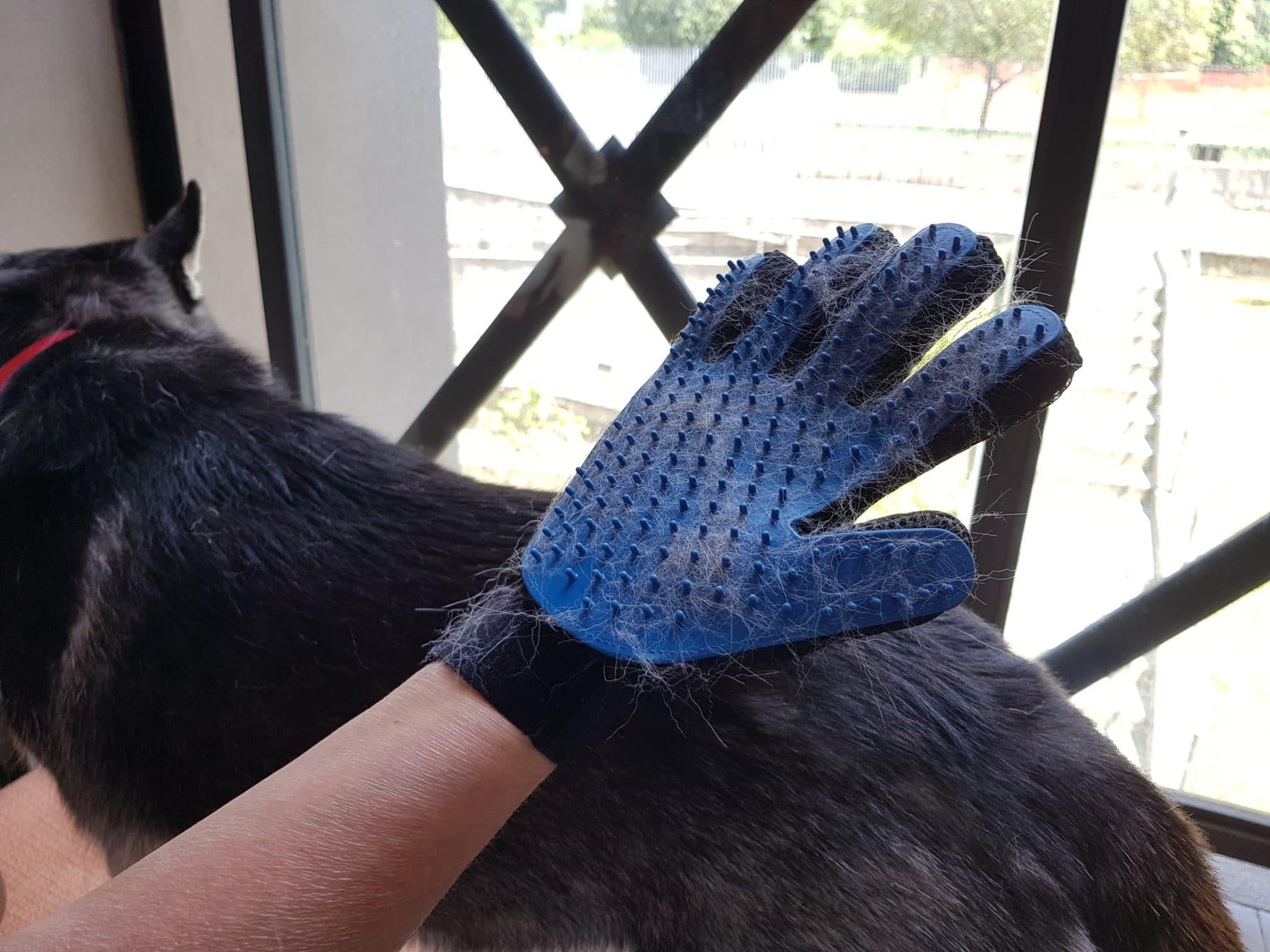 Recensione Guanto Spazzola e Massaggio per cani e gatti