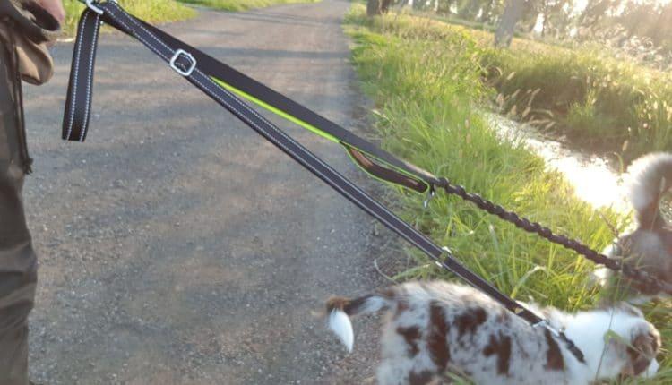 Recensione Furkicks Guinzaglio Mani Libere per 2 Cani, Multifunzione Kit di Regolabile